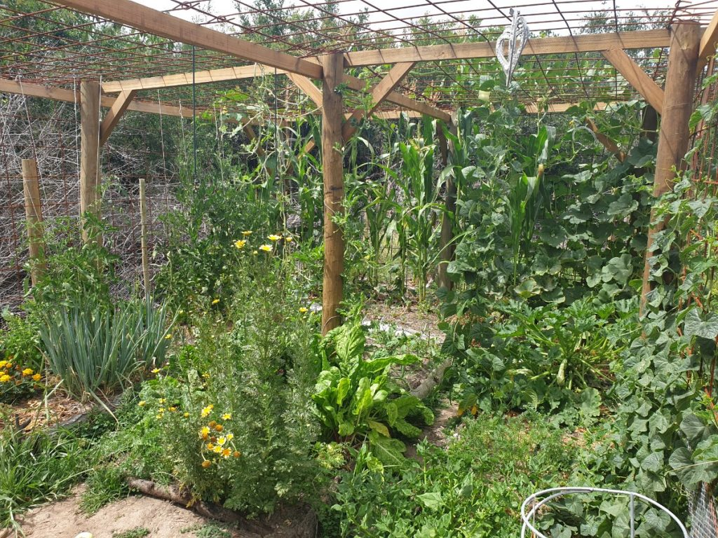 Self Sustainable Vegetable Garden