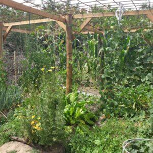 Self Sustainable Vegetable Garden