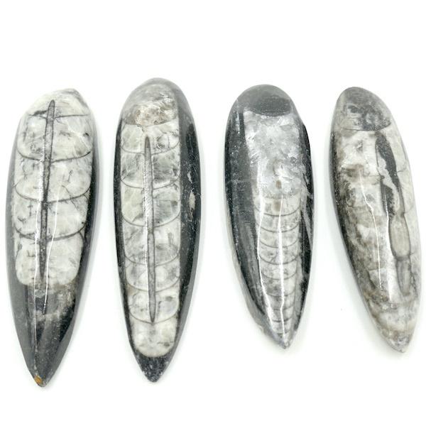 Orthoceras Fossil Polished Lg 1 FO02 1