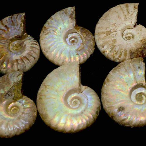 Ammonite Aura 10-20g 1