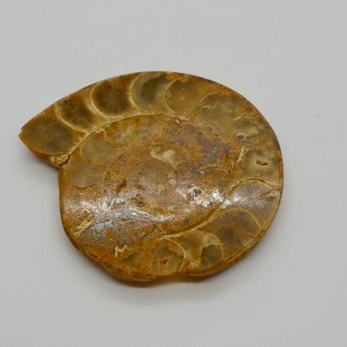 Ammonite_50-60g 3