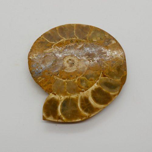 Ammonite_50-60g 7